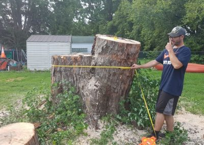 a man measuring a large tree stump