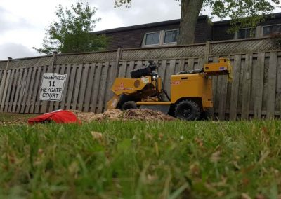 tree stump removal saw